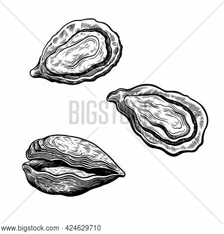 Set Of Oyster Shells Isolated On White Background In Vintage Retro Sketch Engraving Style. Sea Food