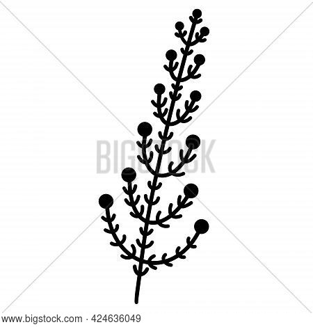 Vector Icon Sprig With Leaves And Berries. Hand-drawn Botanical Element. Black Doodle Isolated On Wh