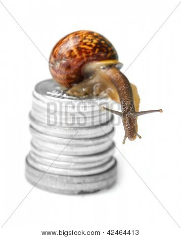 Snail on coins isolated