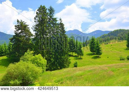 Typical landscape in the forests of Transylvania, Romania. Green landscape in the midsummer, in a su