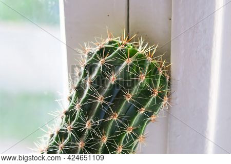 Green Prickly Cactus In A Flowerpot On The Windowsill
