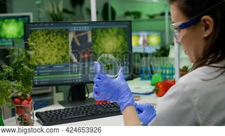 Botanist Researcher Holding Petri Dish With Green Leaf Sample Analyzing Genetic Mutation After Biolo