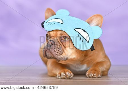 French Bulldog Dog Wearing Funny Sleeping Mask With Grumpy Bear Hat On Head