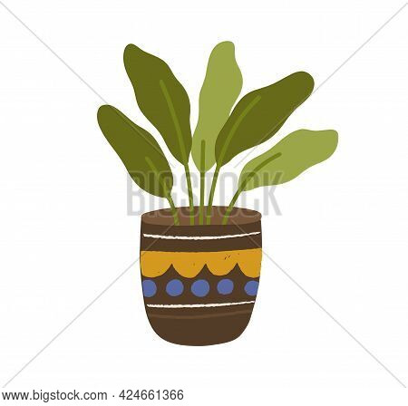 Foliage Houseplant In Pot. House Plant With Leaves Growing In Planter. Green Decoration For Home Int