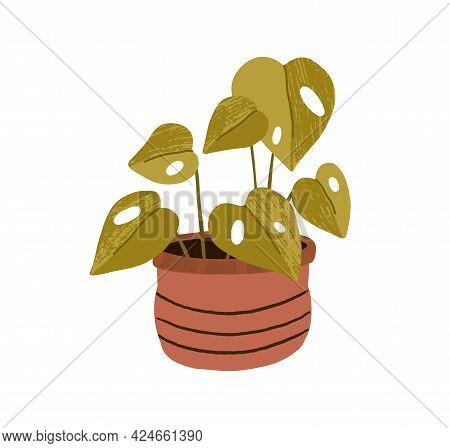 Foliage Houseplant In Clay Pot. Trendy House Plant With Big Heart-shaped Leaves Growing In Planter.