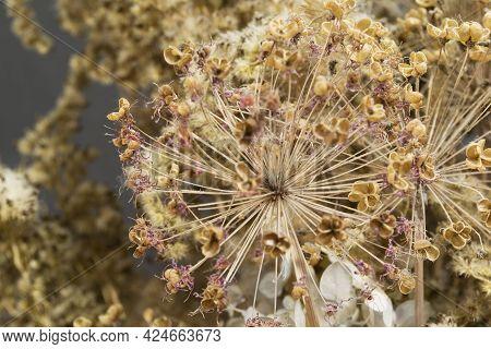 Dried Allium Flowrs And Herbs Decorative Bouquet Closeup