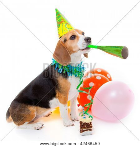 dog party animal celebrating birthday or anniversary