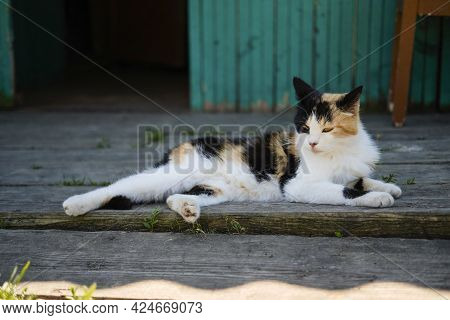 Village Cat Spotted In The Street And Basks In The Sun On The Porch