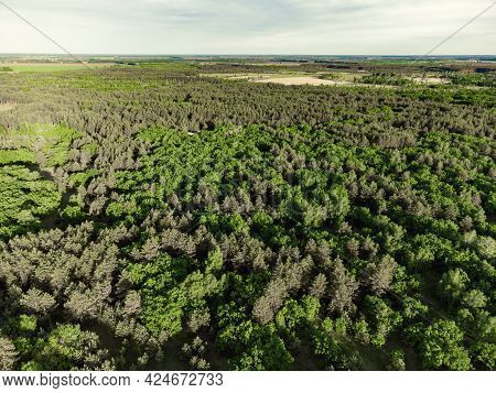 Aerial View Of Green Forest Landscape. Natural Background Of Coniferous Forest. Drone View. Birds Ey