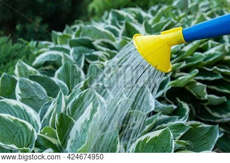 Watering Plants In The Garden With Water From A Watering Can