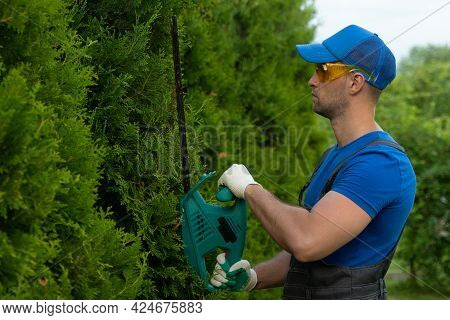 Coniferous Trees Are Trimmed With An Electric Hedge Trimmer To Fit The Shape. A Man Cuts A Thuja Wit