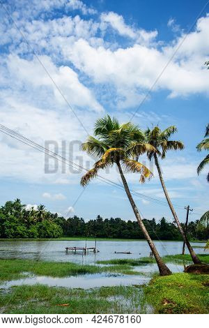 Nature Photography - Coconut Tree Against Blue Sky And White Clouds, Tropical Coconut Palm Tree, Coc