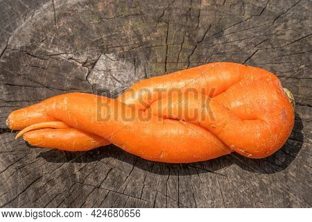 Organic Carrots Of Unusual Shape. A Fused Fruit. Humor In Nature.