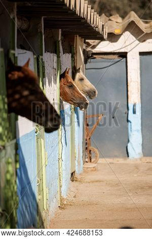 Photo Of Horses Standing In A Corral In A Stable. High Quality Photo