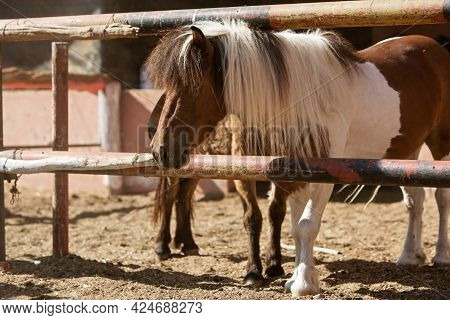 Photo Of Ponies Standing In A Paddock In A Stable. High Quality Photo
