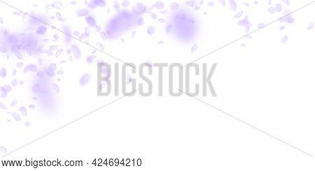 Violet Flower Petals Falling Down. Marvelous Romantic Flowers Falling Rain. Flying Petal On White Wi