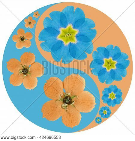 Floral Symbol Yin-yang. Primula. Geometric Pattern Of Yin-yang Symbol, From Plants On Colored Backgr