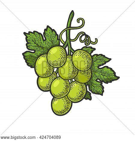 Small Bunch Of Grapes Color Line Art Sketch Engraving Vector Illustration. T-shirt Apparel Print Des