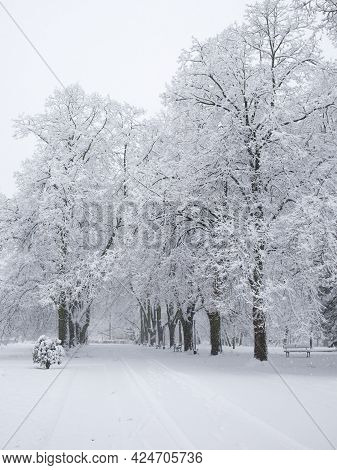 Snow Covered Trees. Winter Landscape, Snowy Blizzard.