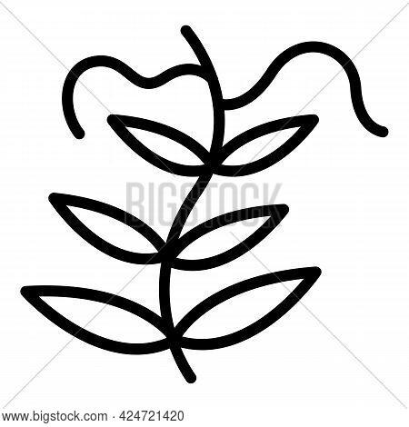Lentil Garden Plant Icon. Outline Lentil Garden Plant Vector Icon For Web Design Isolated On White B