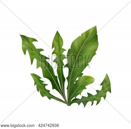 Bunch Of Green Dandelion Leaves On White Background Realistic Vector Illustration