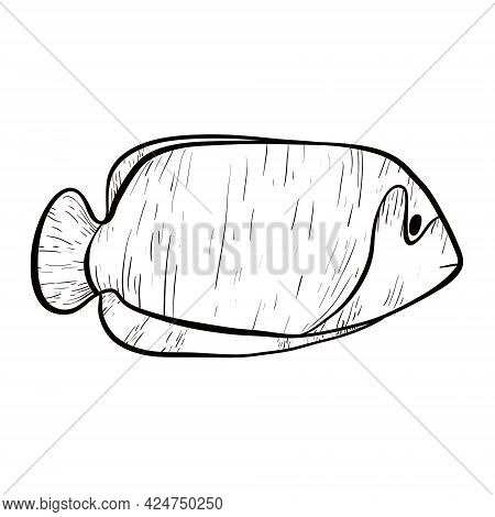 Simple Isolated Vector Doodle Illustration. Line Art Striped Sea Or River Fish With Fins And Tail. U