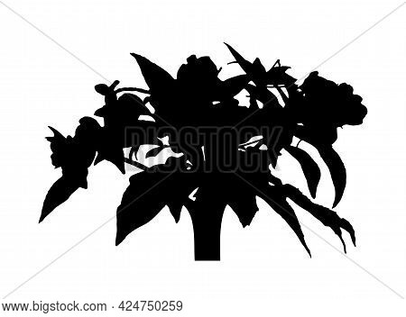 Vector Garden Balsam Plant (impatiens Balsamina) Silhouette Isolated On White Background