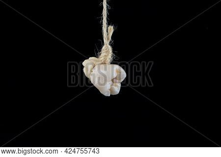 Tooth Extracting Method. Real Human Wisdom Tooth Hanging On Thread