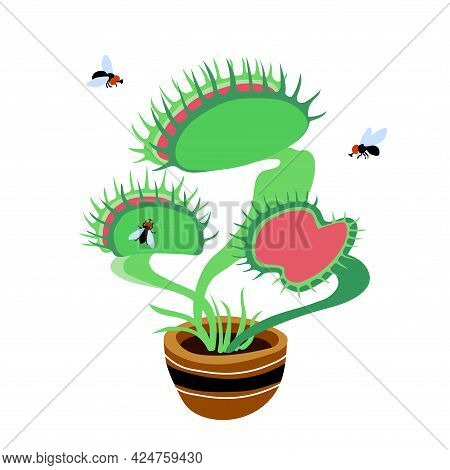 Venus Flytrap Plant, Black Ugly Flies And Carnivorous Home Flower In A Ceramic Pot, Color Vector Ill