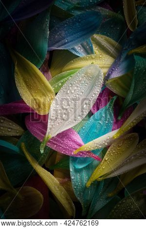 Colourful Multi Coloured Flower Petals With Water Droplets Glinting On Surface Of Flower Petals
