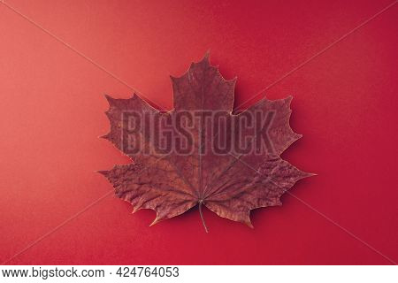 A Dry Autumn Maple Leaf Lies On A Red Background, Close-up. Minimal Autumn Concept, Flat, Flat, Top