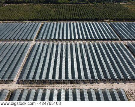 Aerial Drone View Of Huge Areas Greenhouse For Growing Strawberries. Greenhouse Farming, Agriculture
