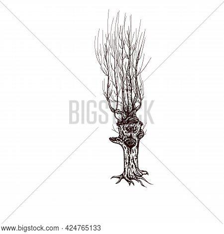 Fall Tree Design, Spooky Winter Tree Graphics, Mystical Autumn Tree Illustration