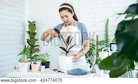 Asian Woman Gardener In Casual Clothes, Take Care Of Plants And Water Spray With Foggy Spray Bottle