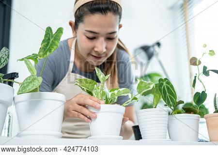Asian Woman Gardener In Casual Clothes, Taking Care For Plants After Transplanting Plant Into New Po