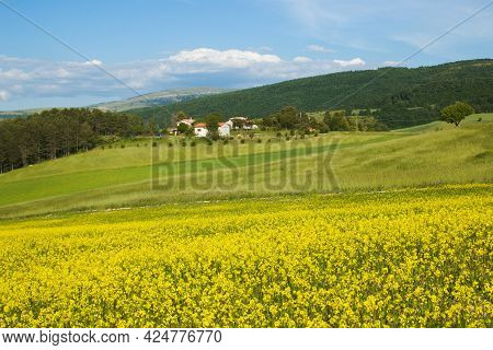 Panoramic View Of Field With Lentils Cultivation Near Colfiorito In Umbria