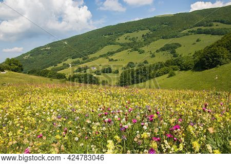 Spring View Of Beautiful Valley With Wild Flowers In Valsorda