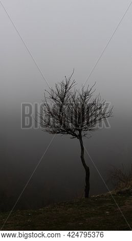 Lonely Dark Tree In The Fog Gothic