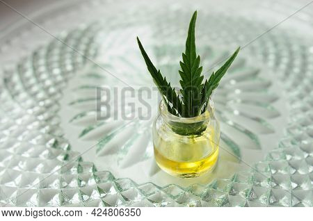 Marijuana Oil, Cbd Recreation. Fresh Cannabis Leaf Close Up. Home Relaxation, Pastime Therapy. Alter