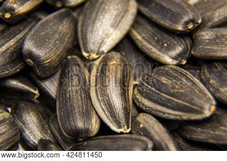 Roasted Sunflower Seeds, Macro Photography, Designer Sunflower Seeds Background. Seeds, Snacks, Fast