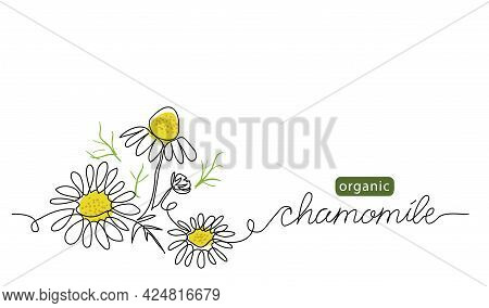 Chamomile, Meadow Daisy, Camomile Flowers Vector Illustration. Background For Label Design. One Cont