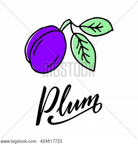 Vector Illustration Of Plum With Black Handwritten Text For Banner, Poster, Menu, Signage, Advertise