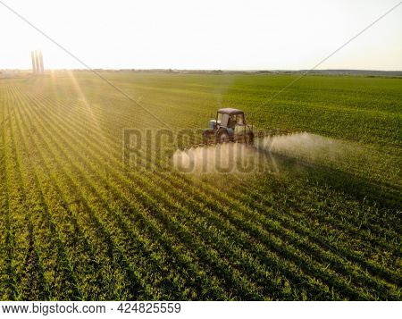 Tractor Sprays Pesticides On Corn Fields At Sunset