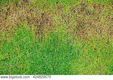 Dead Grass Top View Nature Background Texture Green And Brown Patch Grass Texture The Lack Of Lawn C