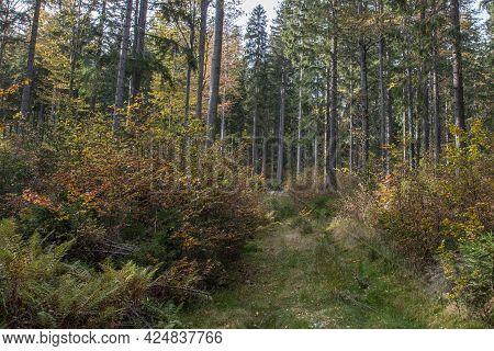 A Forest In Bavaria In Autumn In Bavaria