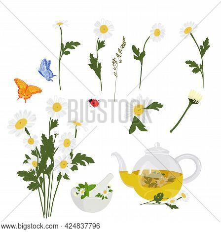 Daisies Set For Stickers. A Bouquet Of Flowers, Butterflies, Herbal Tea. Daisies Close-up. Vector St