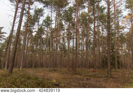 A Nice Forest In Bavaria In Autumn