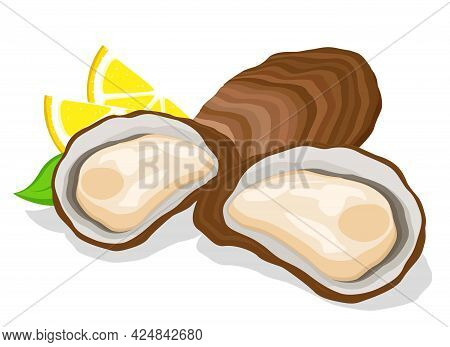 Oysters In Shells Open And Closed With Lemon Close-up. Seafood