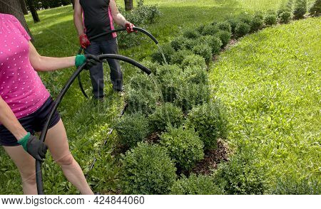 Close-up Of A Woman And A Man Hose Watering Plants In A City Park. The Municipal City Service Carrie
