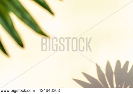 Summer Backgrounds. Plant Leaf Shadows On White Wall In Tropical Summer Sunlight Texture. Shadow Abs